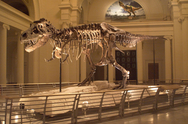 SUE, the T. Rex from the Field Museum
