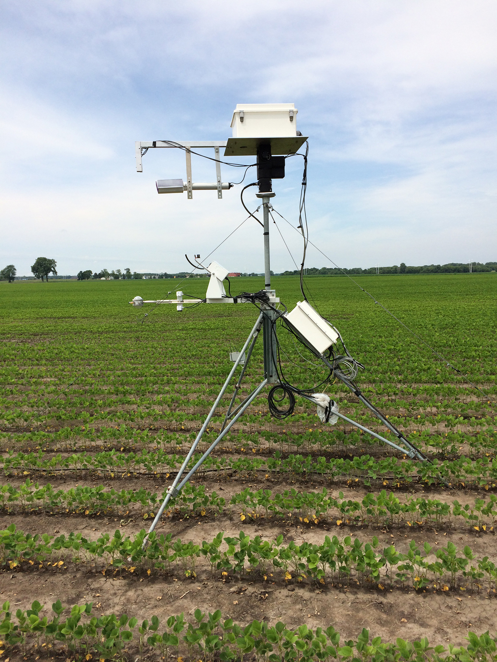 The EcoSpec reflectance sensors in position among young soybean plants at the beginning of the 2015 growing season.