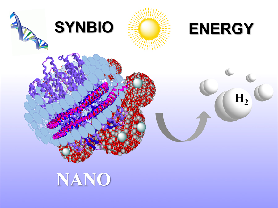 The synthetic purple membrane assembly developed by Elena Rozhkova and fellow Argonne researchers. The assembly, which includes nanodiscs, titanium dioxide and platinum nanoparticles, can transform sunlight into hydrogen fuel.