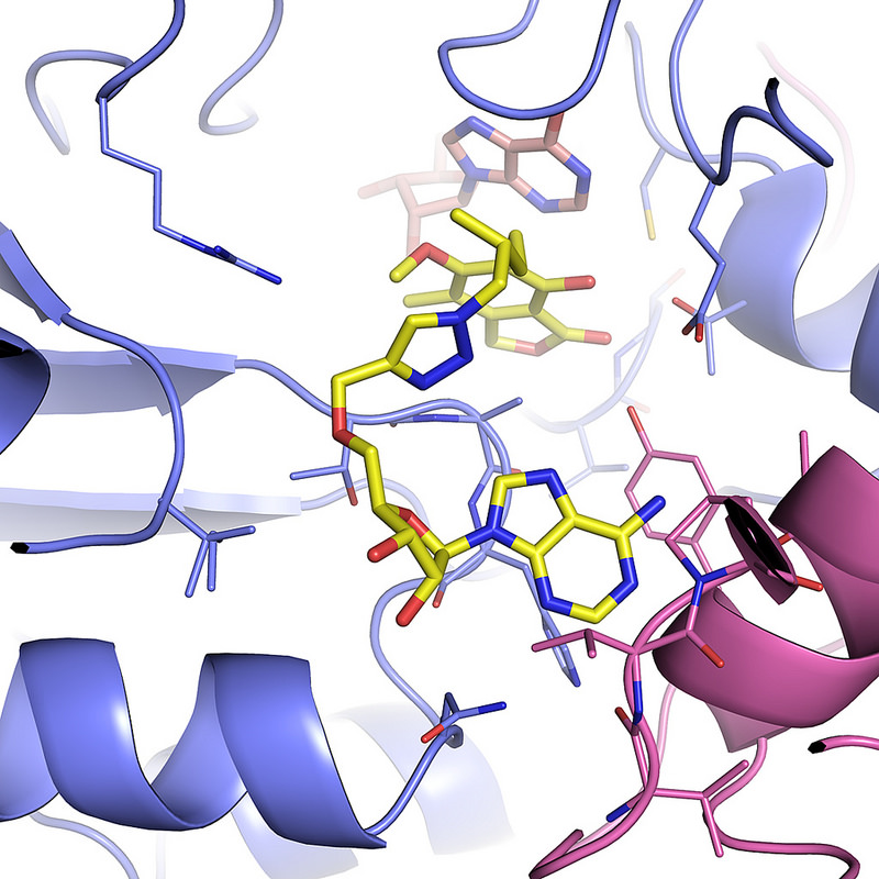 An image of the mycobacterium IMPDH complex when it is attached to IMP and the inhibitor MAD1.
