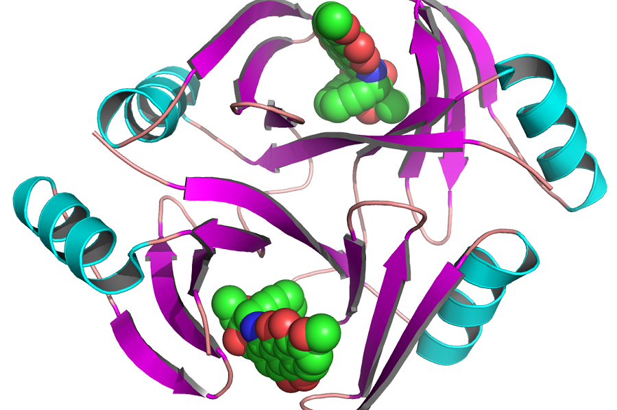 This shows the crystal structure of the tnmS3 gene in complex with tiancimycin. The latter is a natural product that holds promise for new cancer drugs. The gene encodes proteins that allow bacteria to resist the effects of tiancimycins.