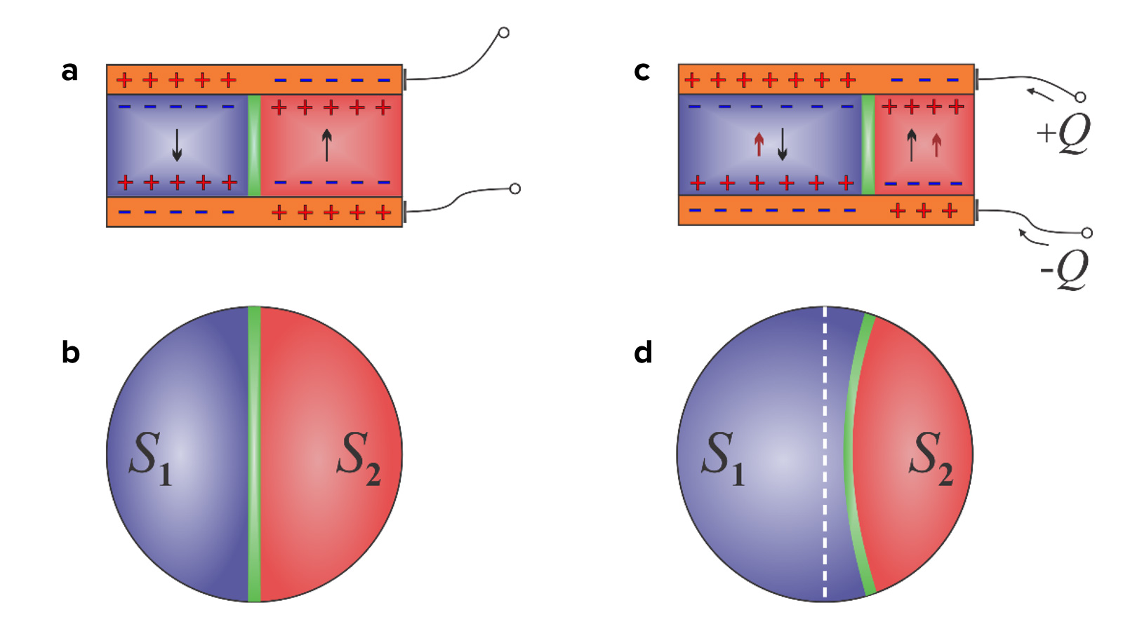 Movement of the domain wall (a-c and b-d) in a capacitor when a charge is added to one side (c).  The resulting redistribution of the domain wall causes a negative capacitive effect.