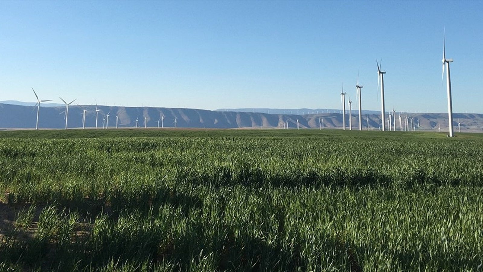 Wind turbines along the Columbia River Gorge. (Image by Paytsar Muradyan / Argonne National Laboratory.)