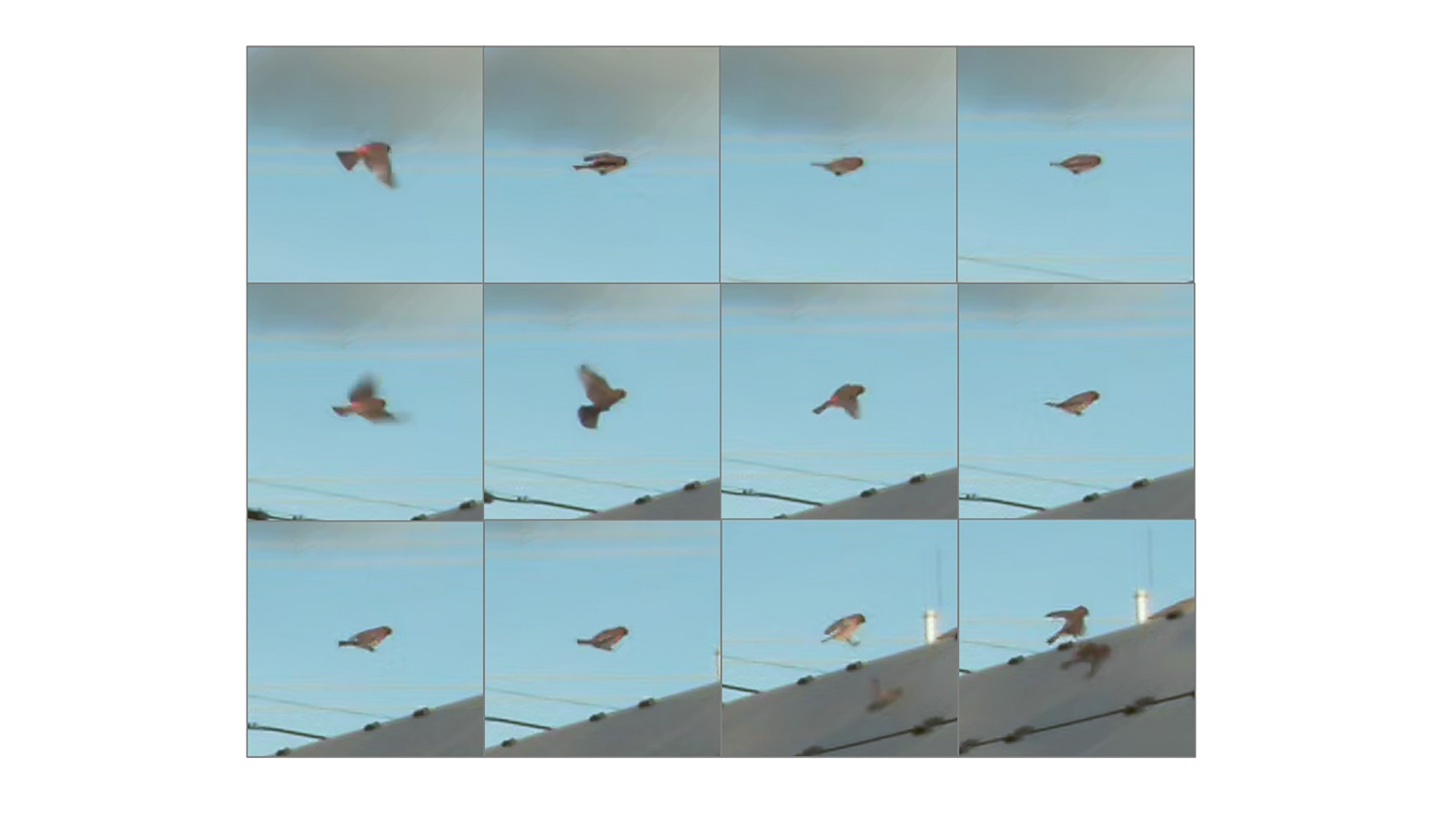 Bird movement captured in video. A series of small video frames will be used for a computer model to learn what a bird would look like. (Image by Argonne National Laboratory.)