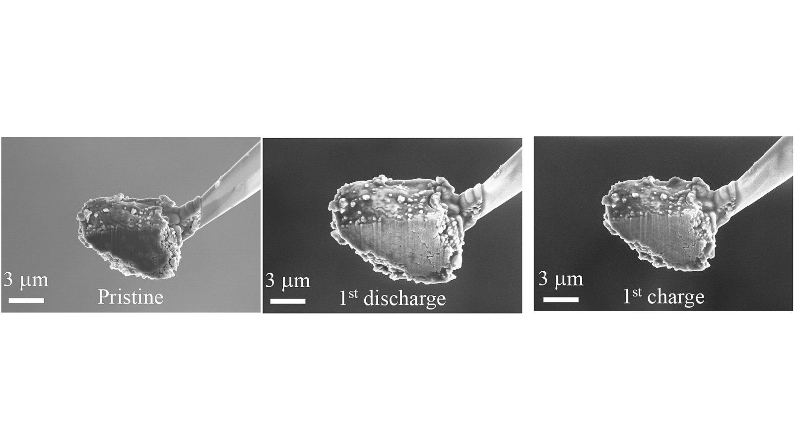 Argonne scientists observed reversible volume and phase change of micrometer-sized phosphorus particles during charge and discharge. (Image by Argonne National Laboratory / Guiliang Xu.)
