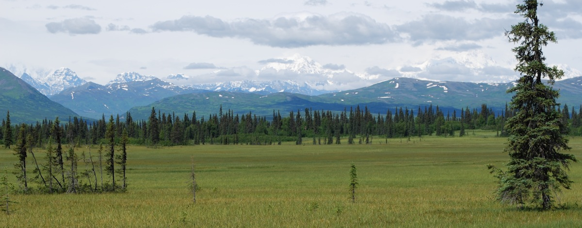 Peatlands in Denali National Park, Alaska.
