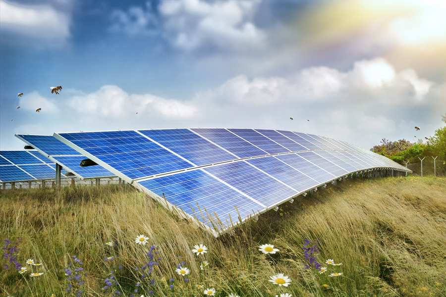 Can Solar Energy Save The Bees Argonne National Laboratory