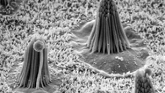 Inner ear hair cells that convert a mechanical stimulus-like sound or head movement into neural signals.