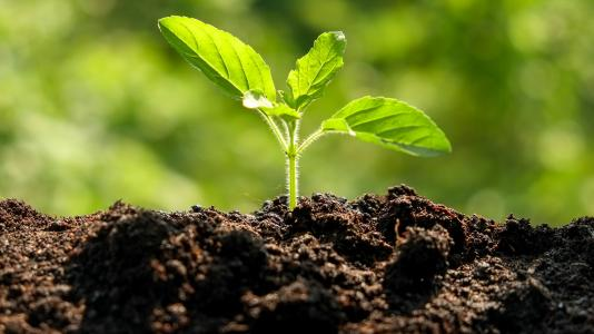 Soil Sustains Humanity