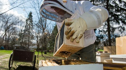 Bill Gasper, an Argonne environmental safety & health coordinator, keeps 100,000 bees in his backyard. Here he's introducing a batch of bees to their new homes.