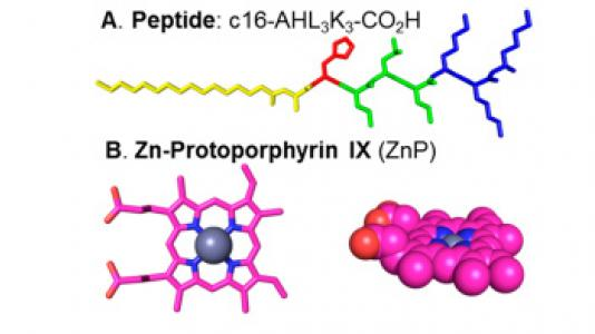 Depiction of the peptide amphiphile