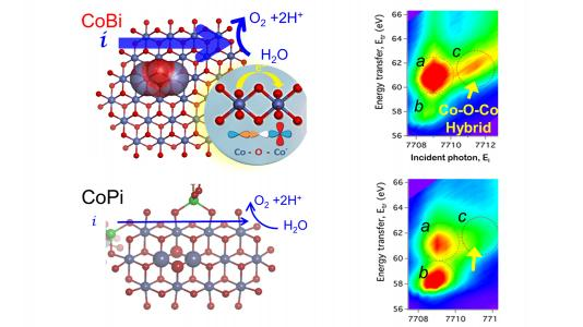 "This graphic shows the ""hybrid orbitals"" in which atoms can share electrons in cobalt borate catalysts, making it a better water-splitting catalyst than cobalt phosphate."