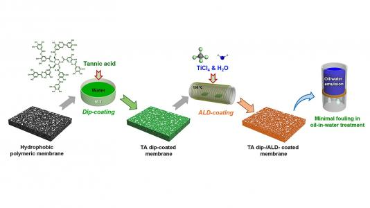 In the experiment, researchers first dip-coated a hydrophobic polymeric membrane in tannic acid (TA), a common polyphenol. Then, the dried TA dip-coated membrane is loaded into the atomic layer deposition (ALD) reactor for coating with titanium dioxide using the precursors titanium tetrachloride and water (TiCl4 and H2O). The coated membranes display minimal fouling in oil-in-water treatment. (Image by Argonne National Laboratory.)