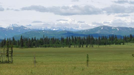 Peatlands in Denali National Park, Alaska.